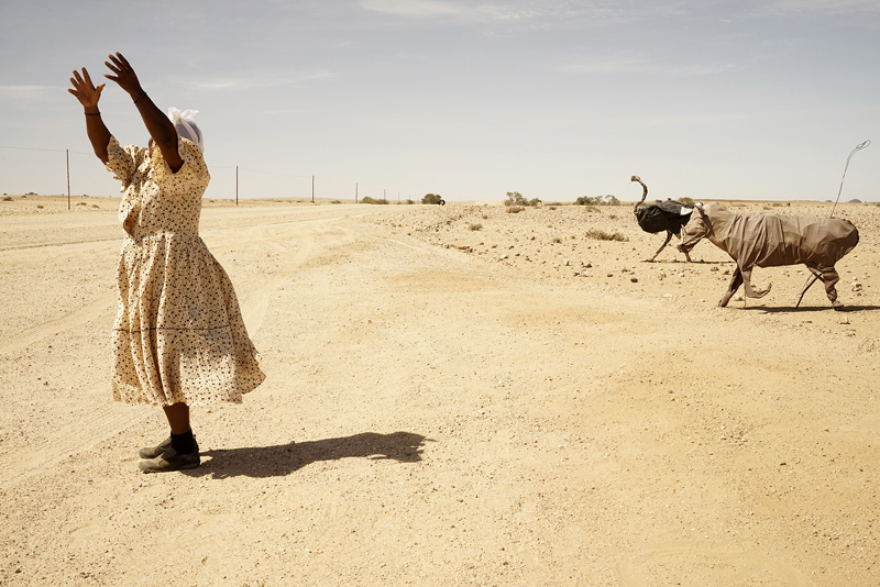 A woman stands on the side of a dusty road with both arms raised in the air, attempting to flag down a vehicle (which is not visible in the photograph). She is positioned on the left of the image and slightly behind and to her right, we see what look like two animal sculptures of a Rhino and an Ostrich running towards the road.