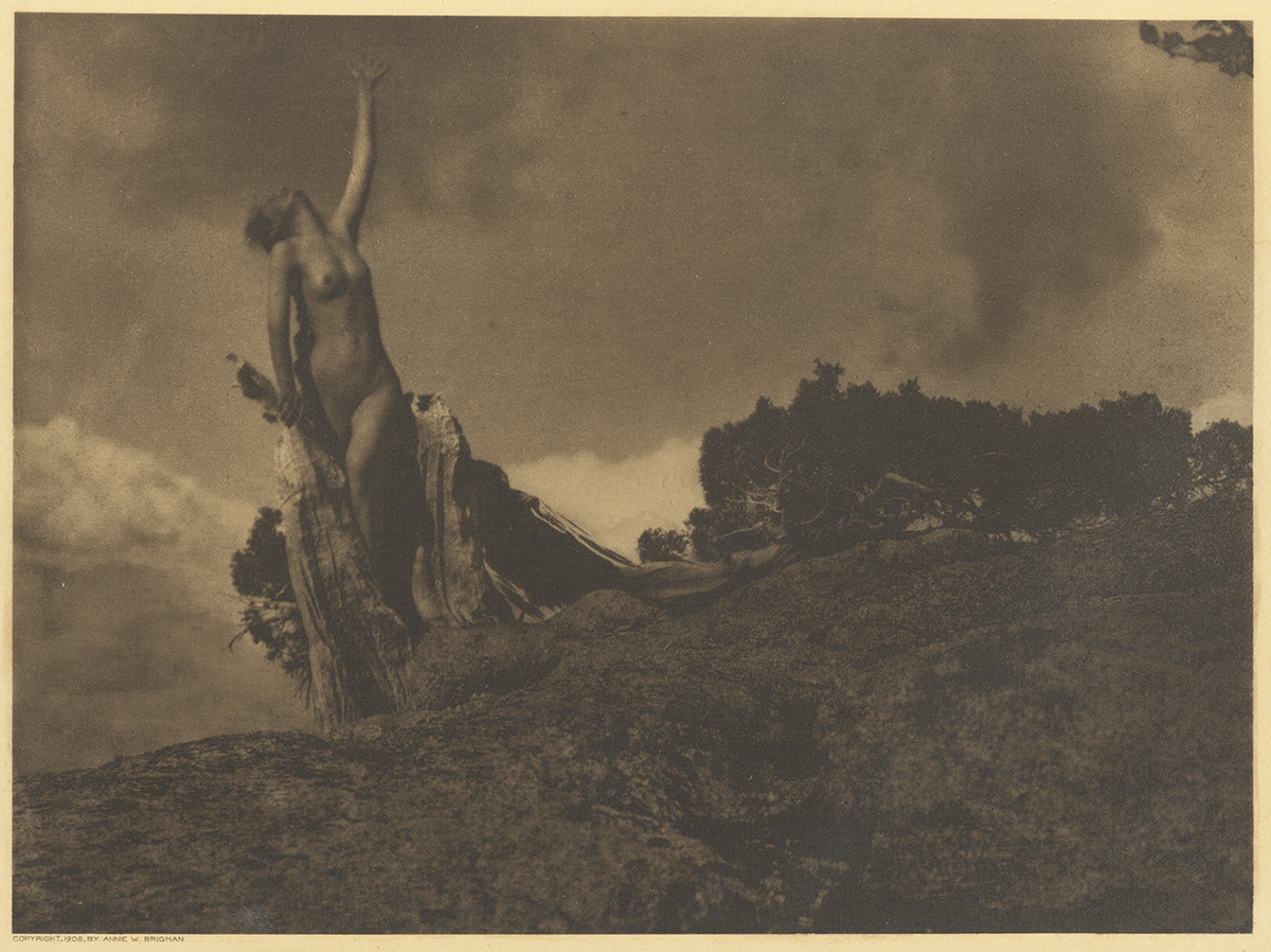 Anne Brigman, Soul of Blasted Pine Photograph