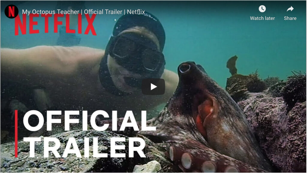 My Octopus Teacher (2020 Netflix)