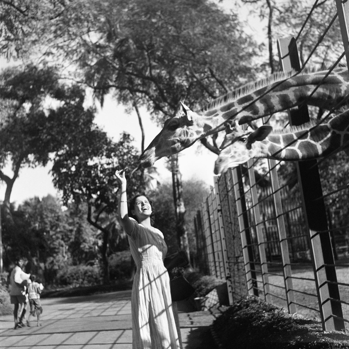 The Bombay Zoo, Late 1930s, Homai Vyarawalla. A woman is seen feeding giraffes at a zoo, she's smiling and wearing a light dress. Image is black and white.