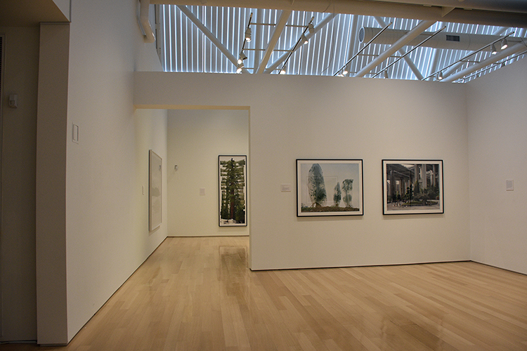 Installation view of The Art of Trees featuring works by Yan Wang Preston, Gund Gallery at Kenyon College, January 22–April 11, 2021. Image courtesy of the Gund Gallery.