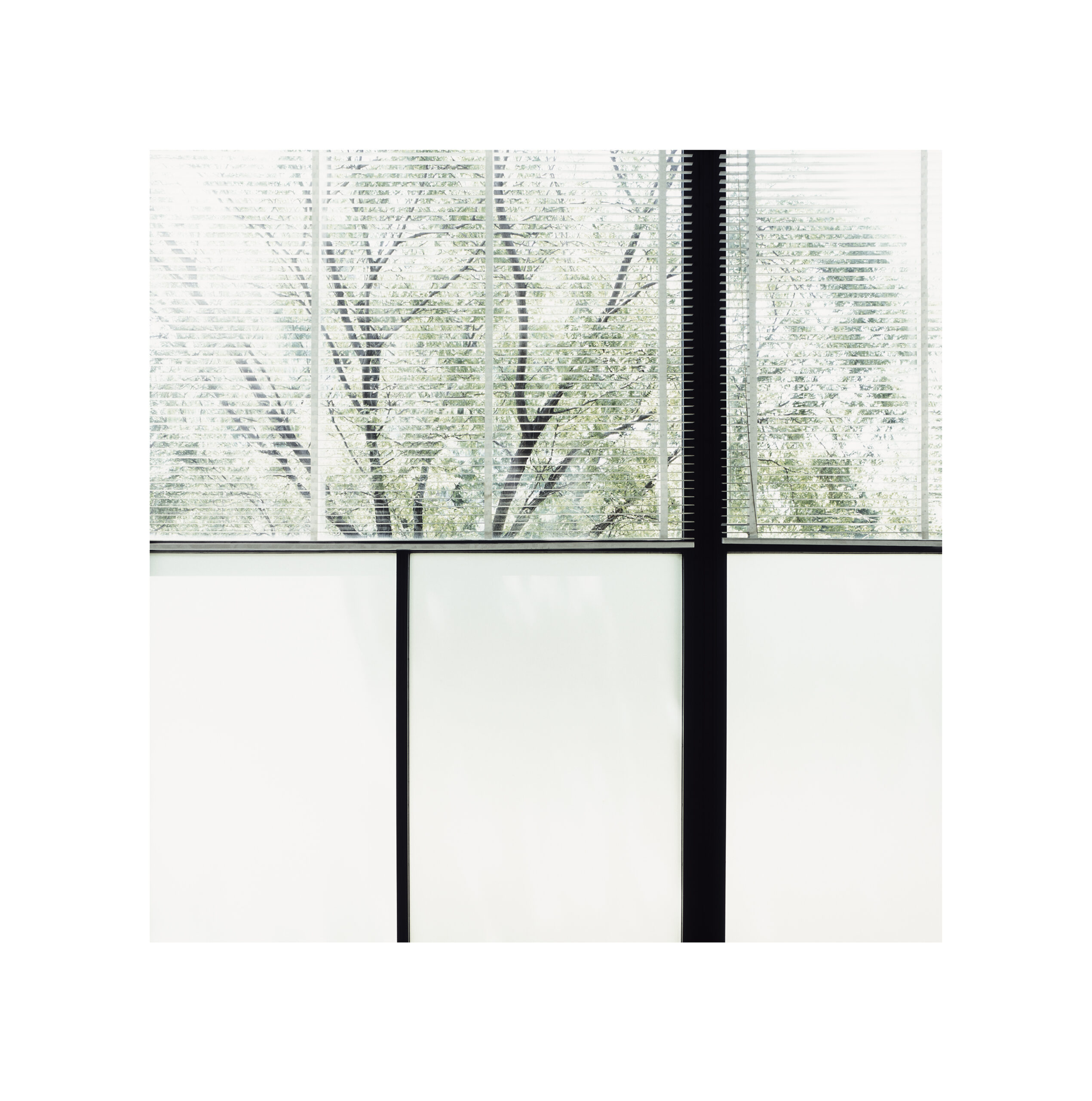 As part of the Autoritratto exhibition by Luisa Lambri, an image of a tree on the other side of a window with venetian blinds