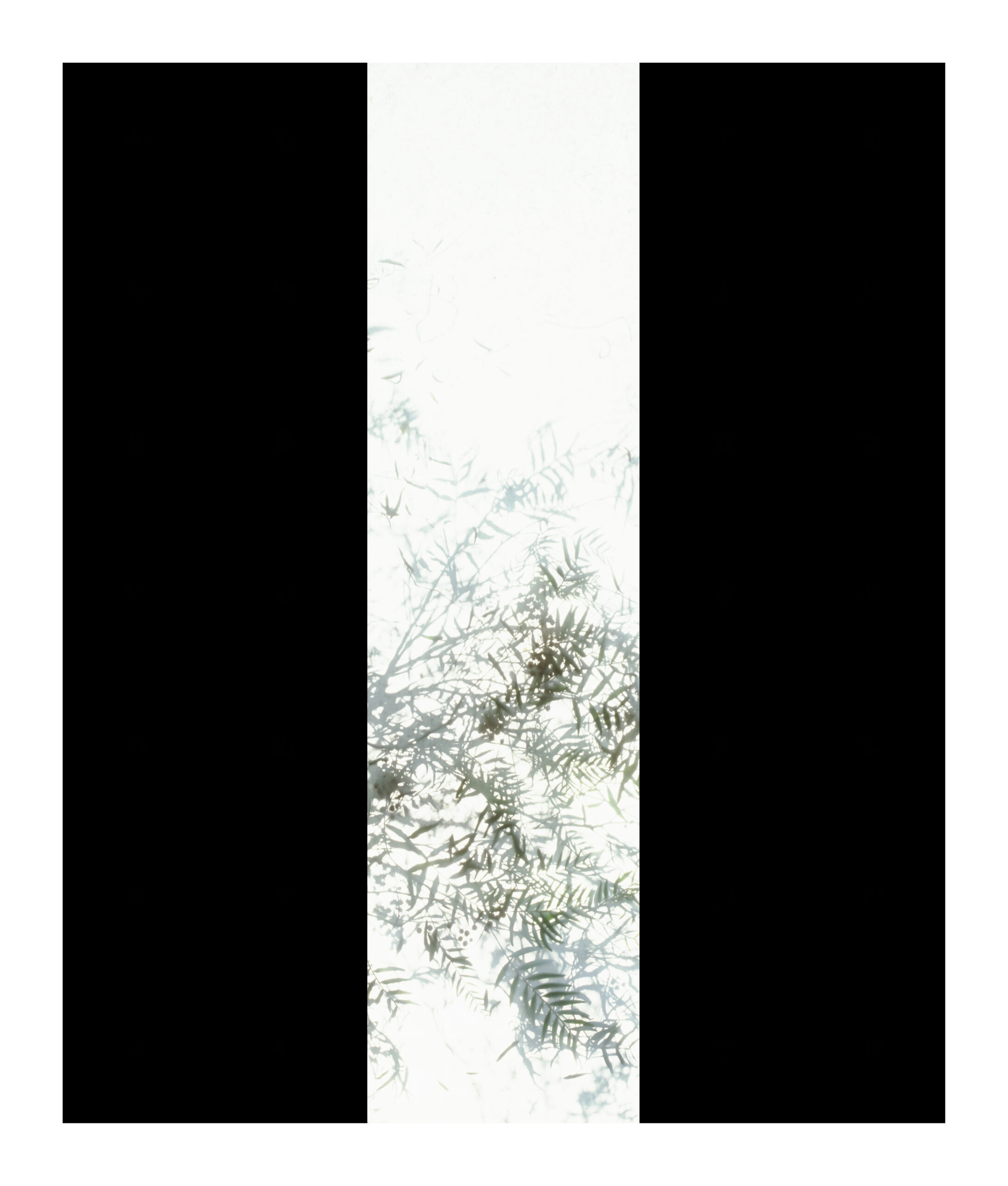 As part of the Autoritratto exhibition by Luisa Lambri, two black borders are left and right of an over-exposed image of leaves on a branch