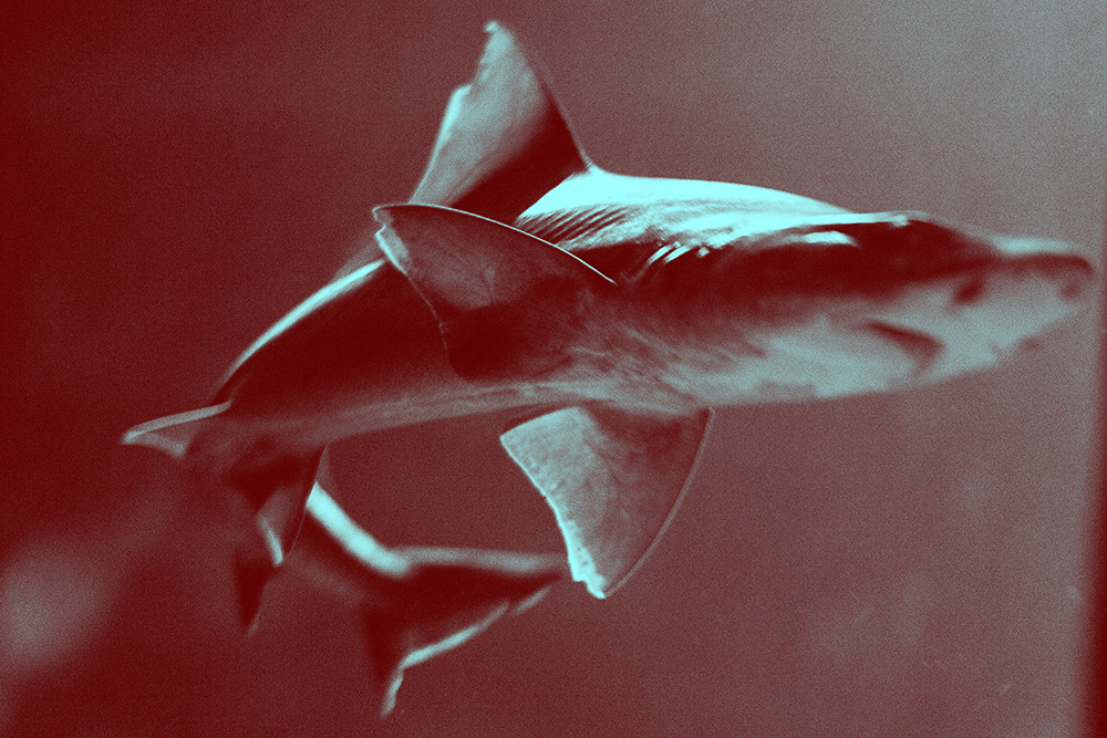 Jaws, from the series 'Menstruation Myths' © Laia Abril, courtesy Les Filles du Calvaire / Royal Photographic Society